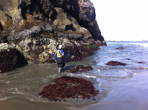 Brent checks out the abundance of mussels.