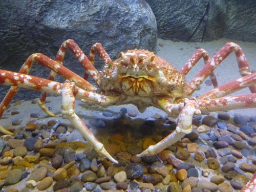 And I enjoyed a visit from a crab.