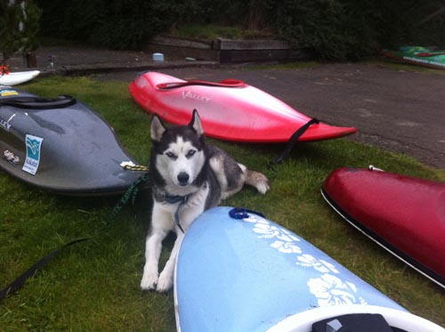 A very friendly dog takes a break by some kayaks.