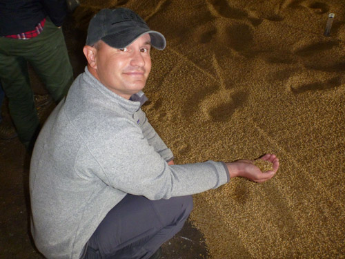 Mark checks out the barley which is spread on the floor of the Laphroaig malting house to germinate.
