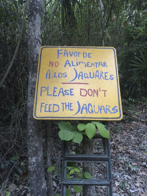 There are many animals in the jungle, and although Jaguar sightings are rare, this sign was brought up in many conversations.