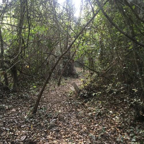 The jungle trail.