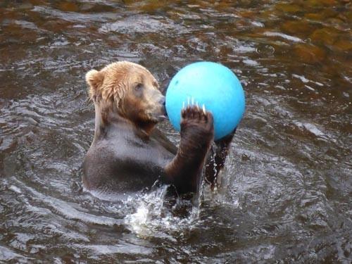 We also visited Orsa Gronklitt, a wonderful bear park.