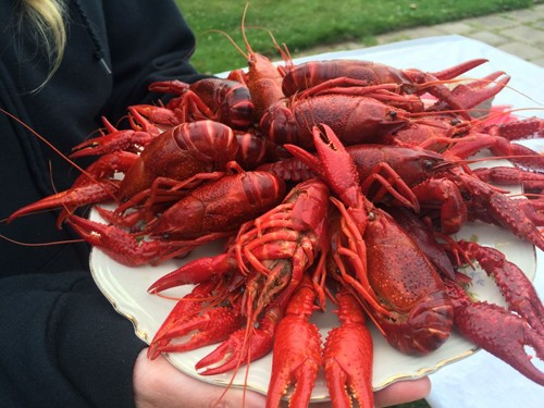 The tasty crayfish.